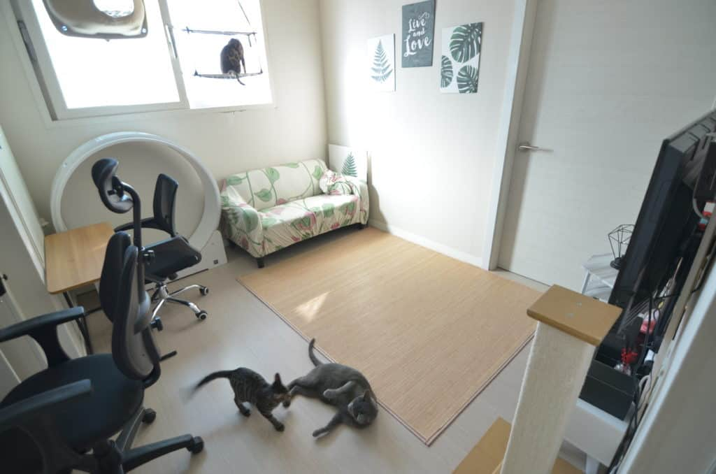 How To Live With 3 Cats In A Studio Apartment Monsieur Tn